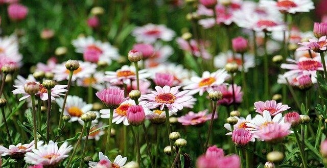 bloemen in de tuin